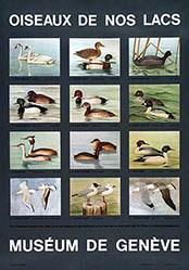 Anonym - Oiseau de nos lacs