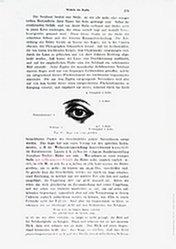 Eppstein Esther - Muskeln des Kopfes
