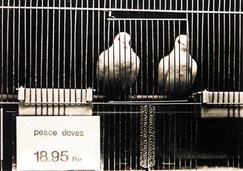Staeck Klaus - Peace doves