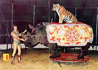 Zumbrunn Robert (Foto) - Circus Knie